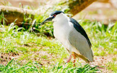 Busy Birdy