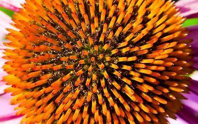 Wheaton Regional Flower