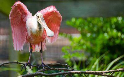 A Bird Out of Seuss