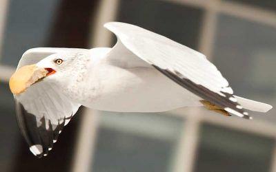 Lucky Bird