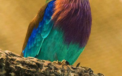 Bird Lookout