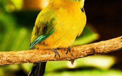 Flourescent Bird