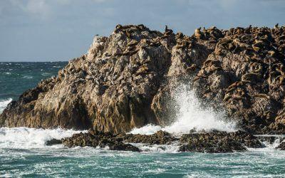 Pacific Wildlife