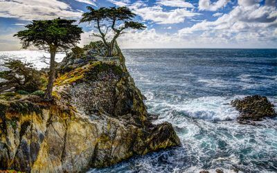 Lone Cypress HDR
